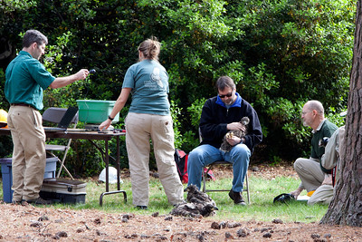 The banding team at work.  They placed two bands on each eaglet, weighed, measuered and took a small blood sample of each bird.