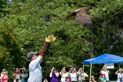 Eagle from King & Queen County is released.