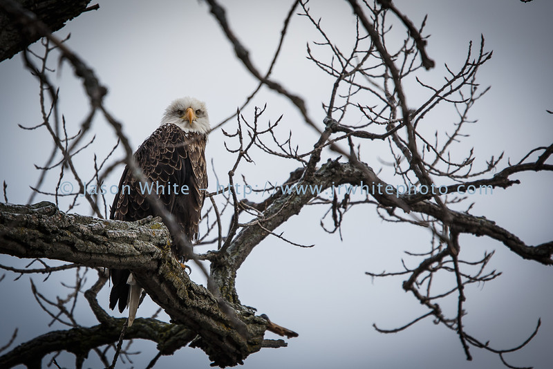 20130113_birds_045