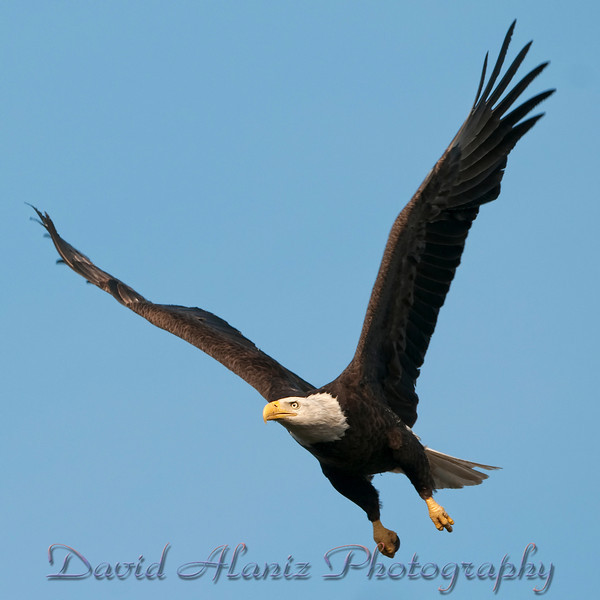 Baytown Eagles_20120129_0048xcn