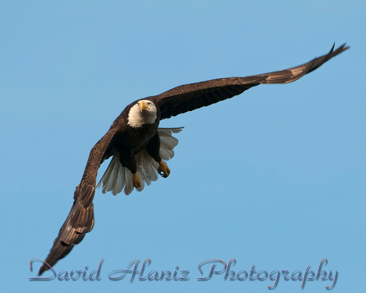 Baytown Eagles_20120129_0042xcn