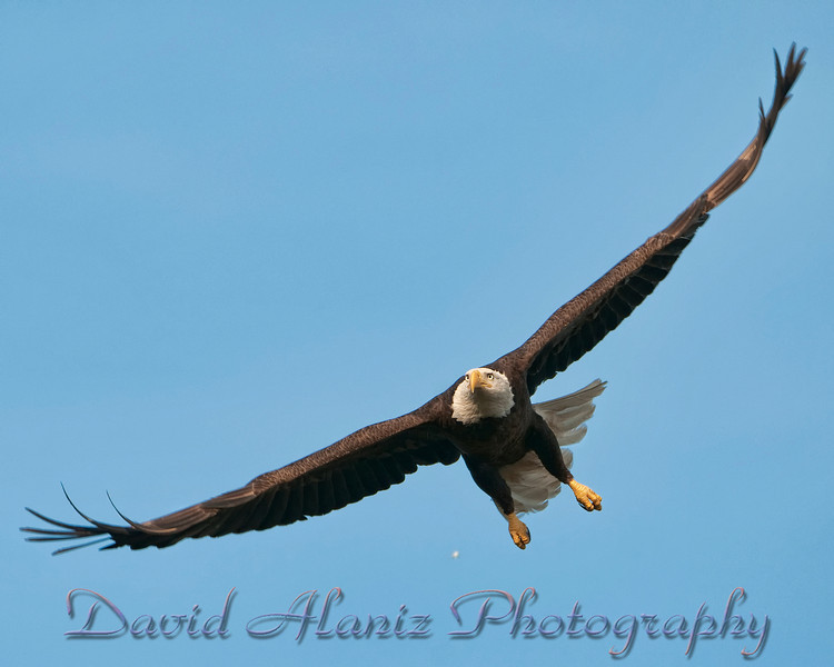Baytown Eagles_20120129_0044xcn