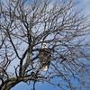 eagles2-12_9900