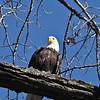 eagles2-12_0010