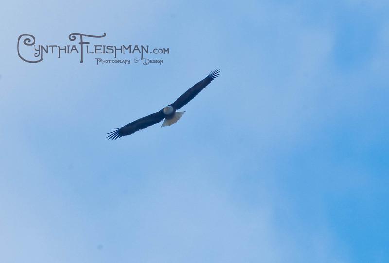 eagles2-12_9314