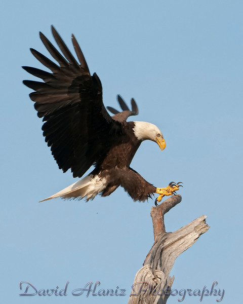 Baytown Eagles_20120129_0050xcn