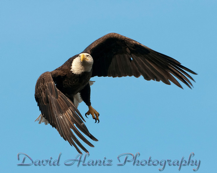 Baytown Eagles_20120129_0040xcn