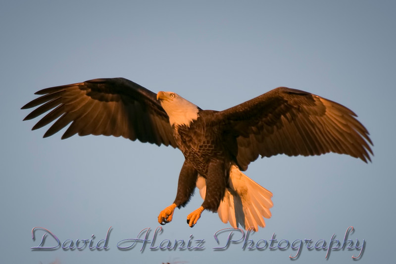 Baytown Eagles_20101106_0220xcn