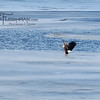 eagles2-12_9368