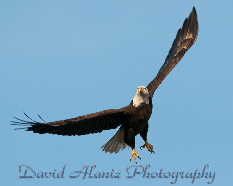 Baytown Eagles_20120129_0039xcn