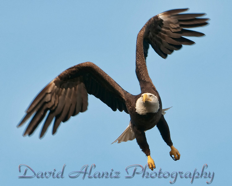 Baytown Eagles_20120129_0043xcn