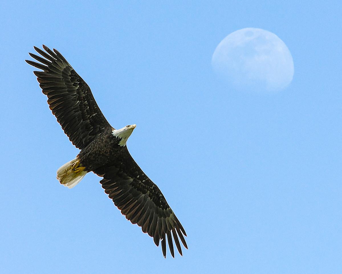 Eagle and Moon