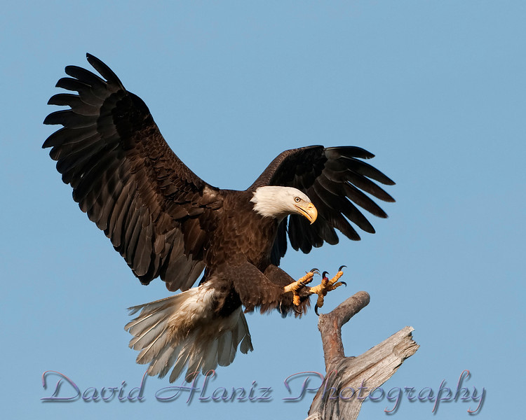 Baytown Eagles_20120129_0014xcn
