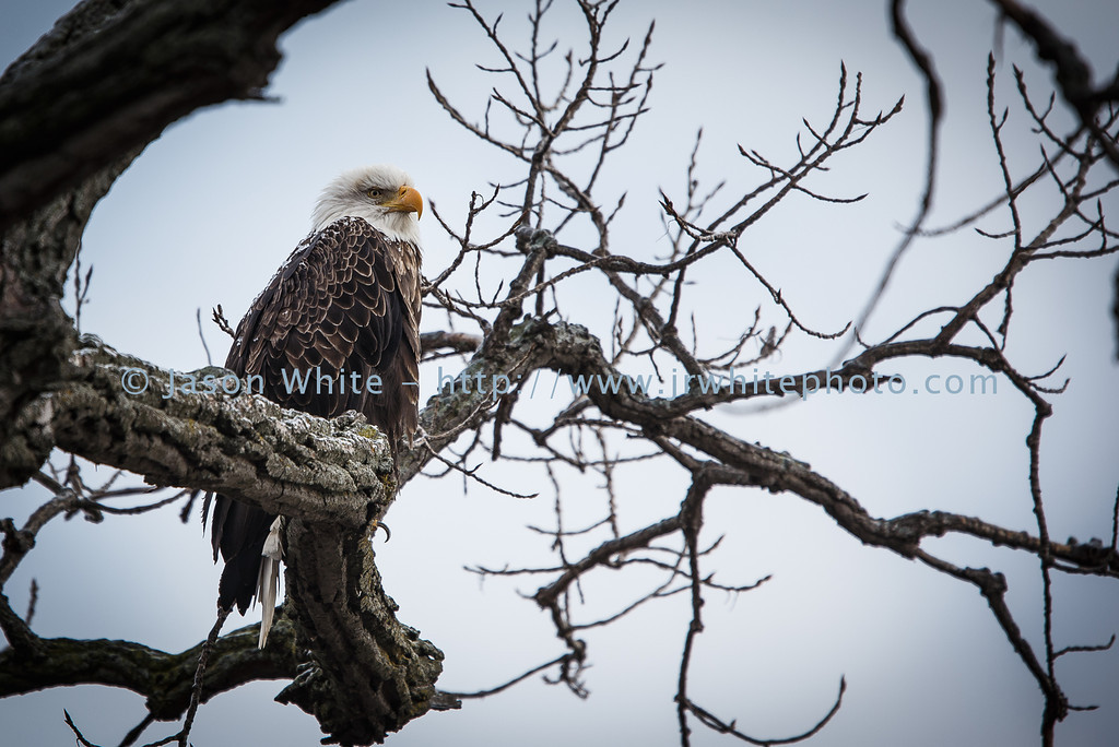 20130113_birds_061