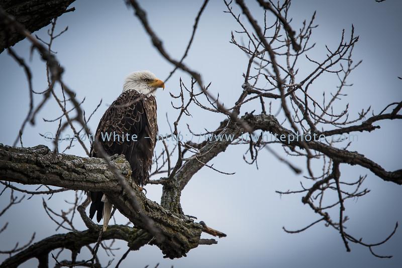 20130113_birds_034