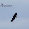 eagles2-12_9333