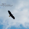 eagles2-12_9350