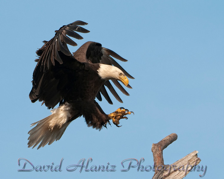 Baytown Eagles_20120129_0049xcn