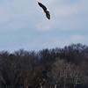 eagles2-12_9363