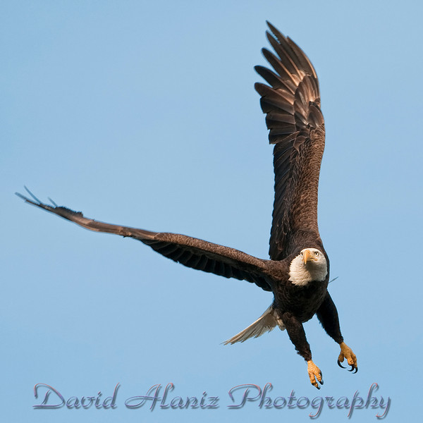 Baytown Eagles_20120129_0041xcn