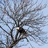 eagles2-12_9693