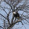 eagles2-12_9689