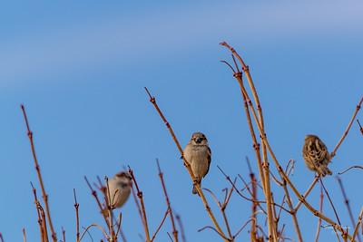 Three In The Bush