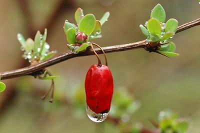Early Spring Rain