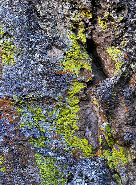 10-17-2010: Rhyolite with Lichens.  east of madras, on the flanks of Oligocene calderas a shaded north-facing rhyolite cliff supports a variety of wildly-colored lichens.  Scale--about 10 feet from top to bottom of image. Nikon D700, 85mm 1.4D lens.  ISO 320 f2.0@1/250