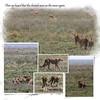 Day 07 Serengeti Cheetah 7