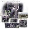 Day 11 Amboseli 3