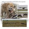 Day 07 Serengeti Cheetah 11