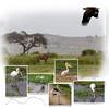Day 11 Amboseli 5