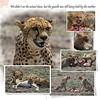 Day 07 Serengeti Cheetah 8