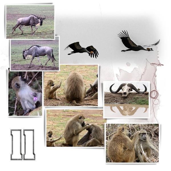 Day 11 Amboseli 1