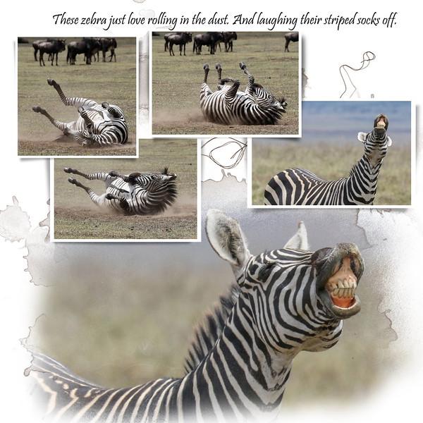 Day 08 Serengeti to Crater 6