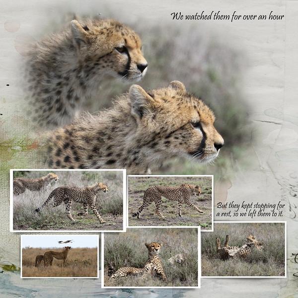 Day 07 Serengeti Cheetah 4