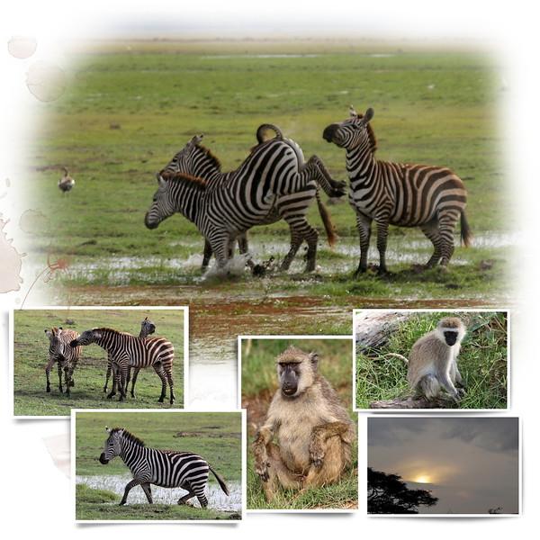 Day 10 Arusha to Amboseli 4