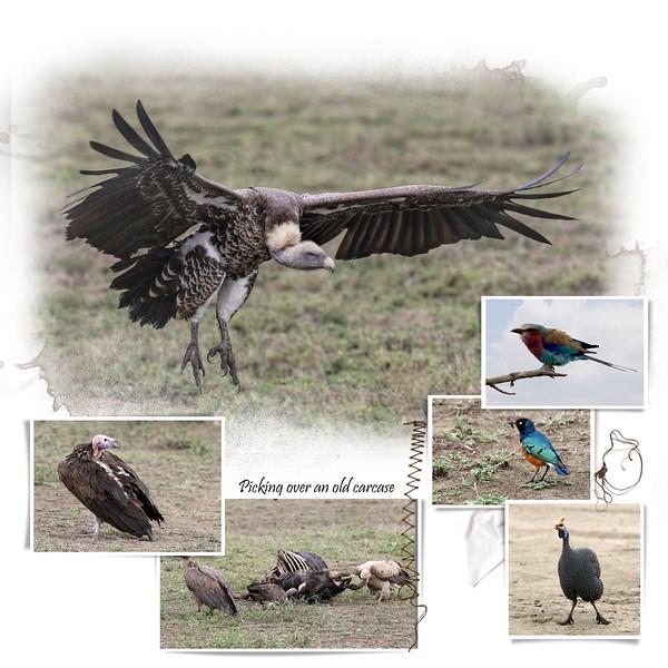 Day 07 Serengeti Cheetah 2