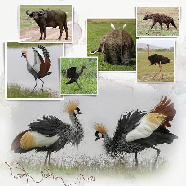 Day 11 Amboseli 2