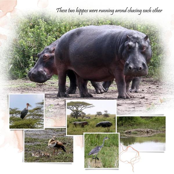 Day 06 Serengeti Mud 4