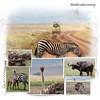 Day 08 Serengeti to Crater 5
