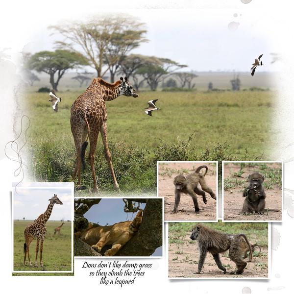 Day 06 Serengeti Mud 5