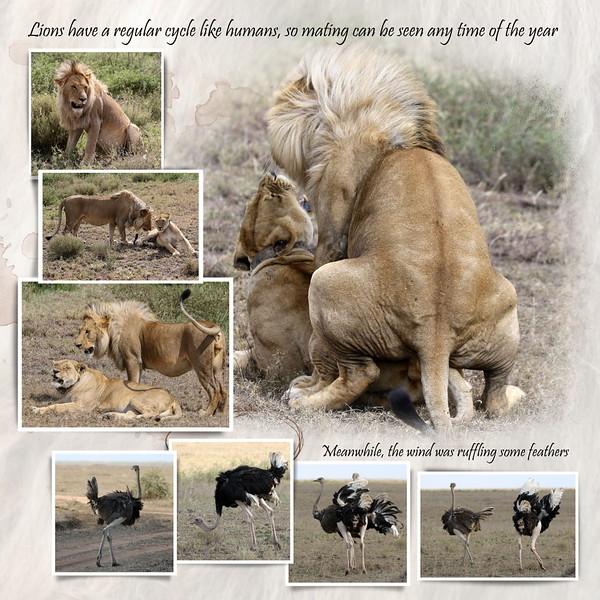 Day 06 Serengeti Mud 9