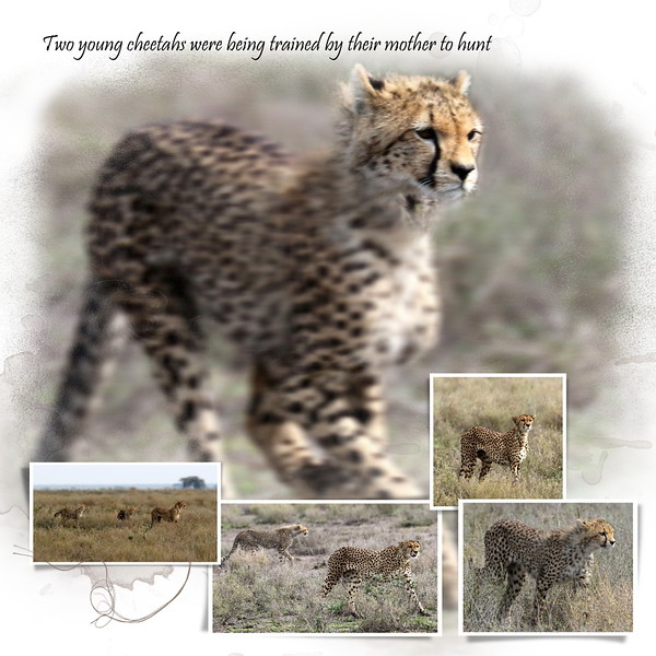 Day 07 Serengeti Cheetah 3