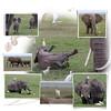 Day 11 Amboseli 4