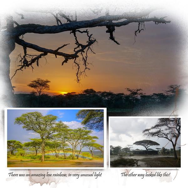 Day 07 Serengeti Cheetah 12