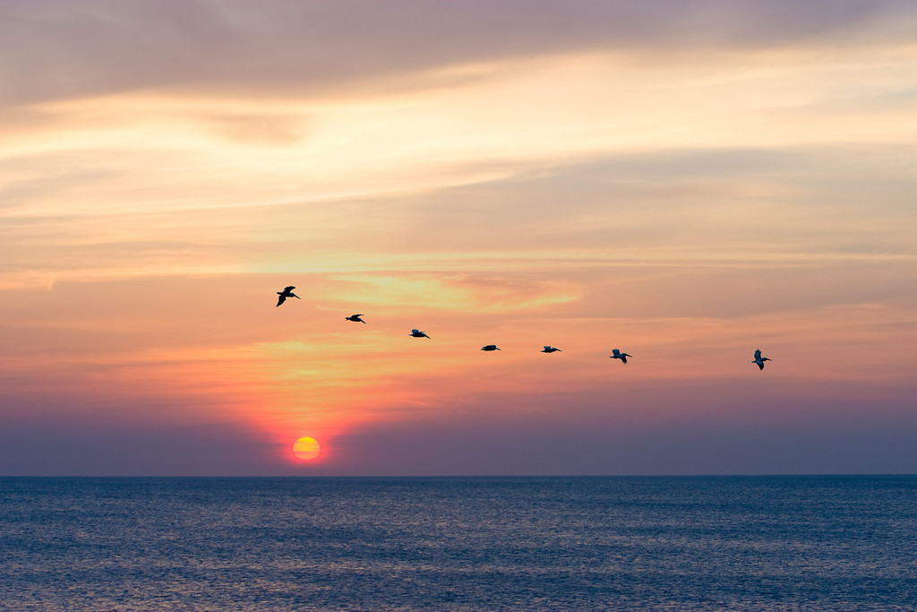 Pelicans at Sunrise, Sandbridge Beach, Virginia