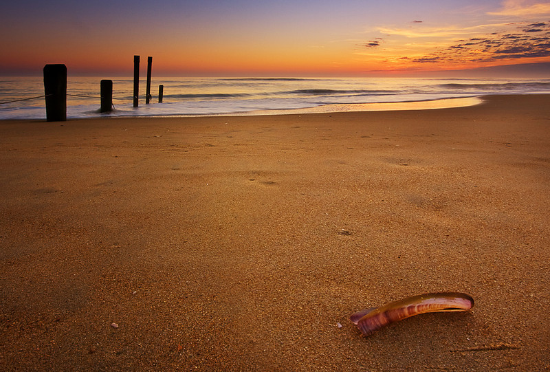 Razor Shell at Sunrise, Sandbridge, VA