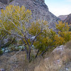 Fall Foliage in Owens River Gorge